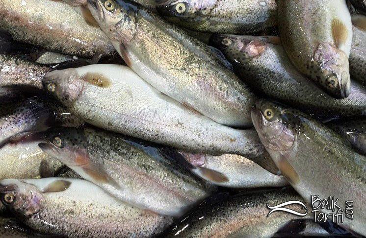 alabalık resmi - trout - gökkuşağı cinsi