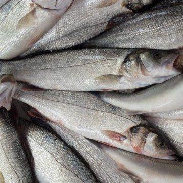 Levrek Balığı - Sea Bass - Branzino