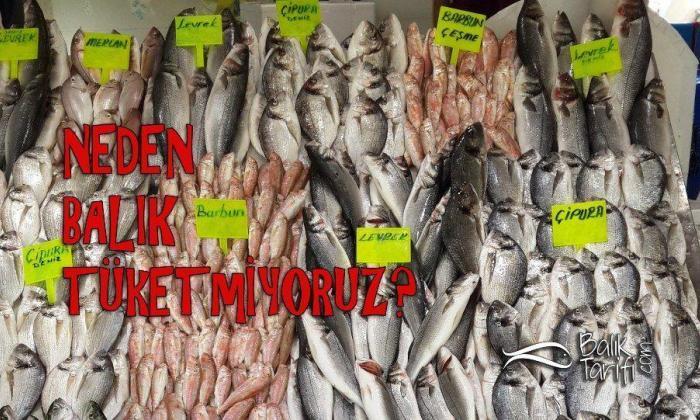 Neden Balık Tüketmiyoruz?