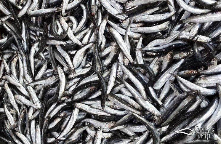 Hamsi hangi ayda daha lezzetli olur? Hangi mevsimde hangi balık yenir?