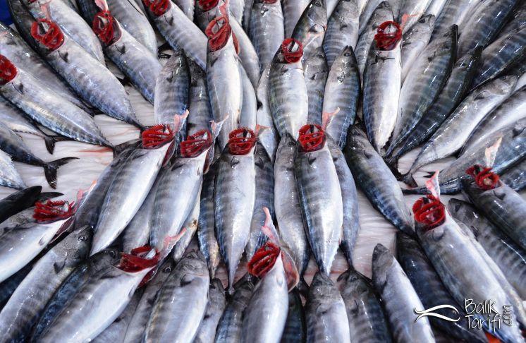Palamut hangi ayda daha lezzetli olur? Hangi mevsimde hangi balık yenir?