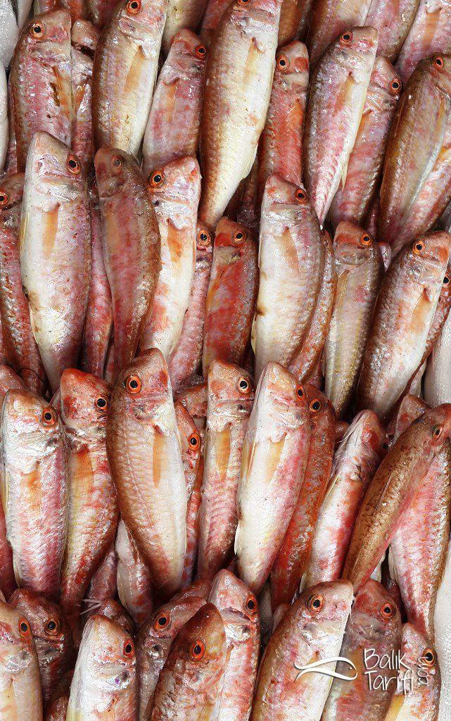 Barbun balığı - balık tarifi