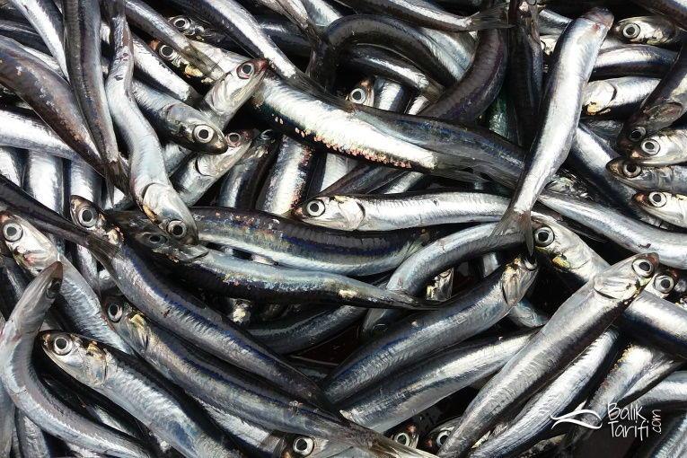 Hamsi balığı - balık tarifi